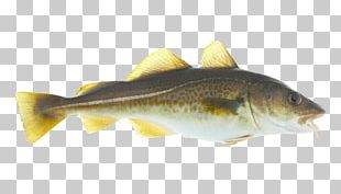 Norway Norwegian Cuisine Atlantic Cod Seafood PNG