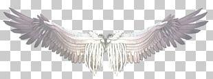 Buffalo Wing Castiel Bird PNG