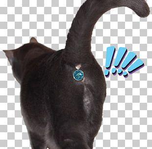 Cat Felidae Kitten Dog Tail PNG