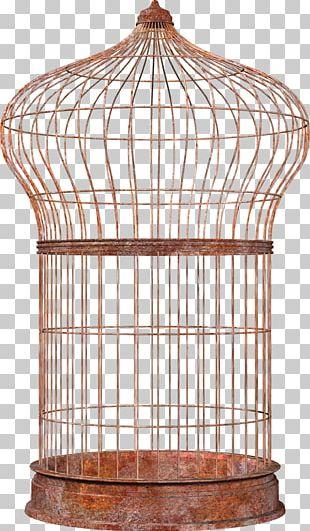 Bird Cell PNG