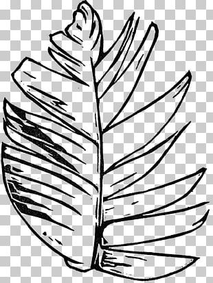 Leaf Flowering Plant Line Art PNG