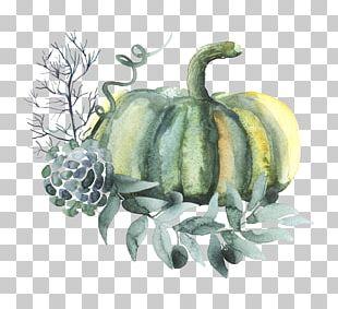 Pumpkin Watercolor Painting Vegetable PNG