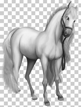 American Miniature Horse American Saddlebred Pony White PNG