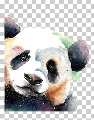 Giant Panda Bear Watercolor Painting Drawing PNG