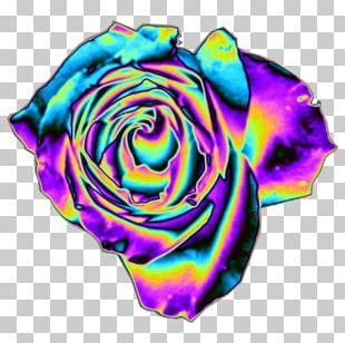 Rainbow Rose Garden Roses Cut Flowers Petal PNG