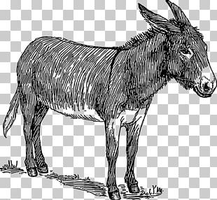 Donkey Drawing Watercolor Painting Sketch PNG
