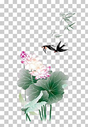 Lotus Nelumbo Nucifera Euclidean PNG