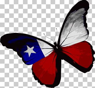 Flag Of Texas Butterfly Flag Of The United States PNG