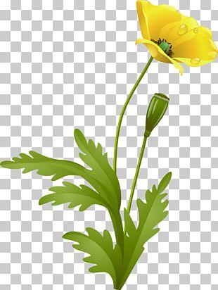 Flower Poppy Raster Graphics PNG