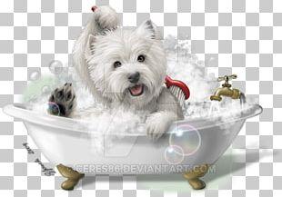 West Highland White Terrier Cairn Terrier Maltese Dog Yorkshire Terrier Smooth Fox Terrier PNG