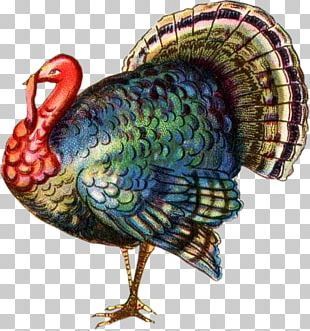 Black Turkey Turkey Meat Thanksgiving PNG