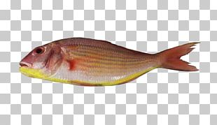 Northern Red Snapper Fish Products Bream Tilapia PNG