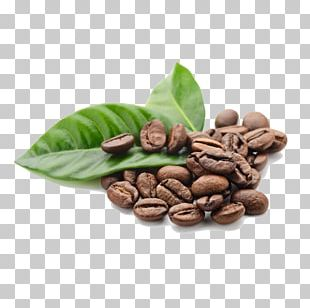 Arabica Coffee Tea Cafe Robusta Coffee PNG