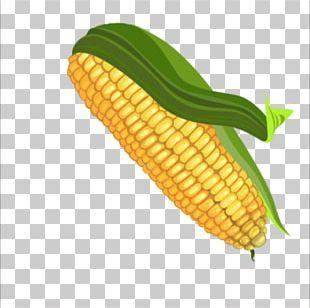 Corn On The Cob Maize Color Palette PNG