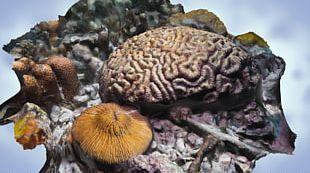 Great Barrier Reef Coral Reef Artificial Reef PNG
