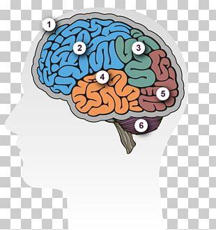 Human Brain Dementia Lateralization Of Brain Function Alzheimer's Disease PNG