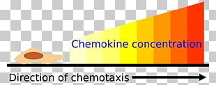 Chemotaxis Assay Chemokine Cell Gradient PNG
