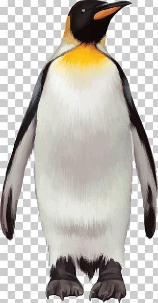 King Penguin Bird PNG