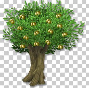 Olive Leaf Tree PNG