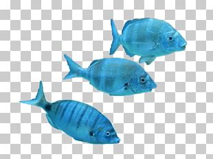 Marine Biology Tropical Fish Coral Reef Fish PNG