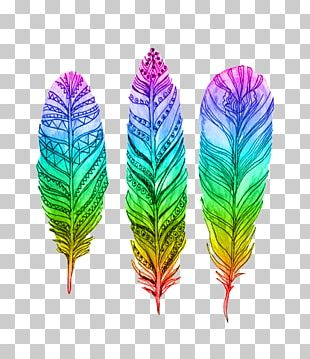 Bird Pin Feather Drawing PNG