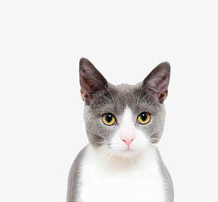 Cat Face Closeup PNG