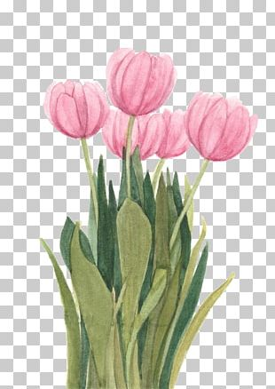 Tulip Watercolor Painting Floral Design Flower PNG
