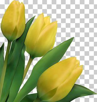 Indira Gandhi Memorial Tulip Garden Flower Drawing PNG