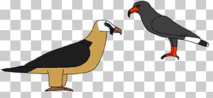 Beak Water Bird Fauna Landfowl PNG