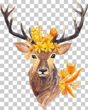 Deer Hunting Antler Deer Horn PNG