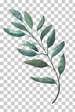 Watercolor Painting Leaf Drawing PNG