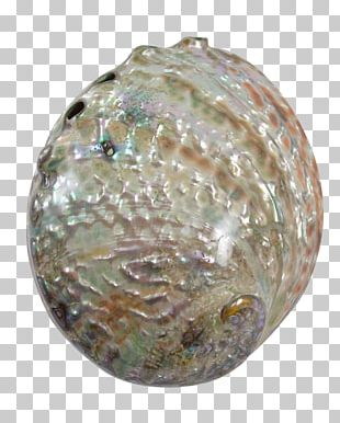 Abalone Gemstone Seashell Christmas Ornament Jewelry Design PNG