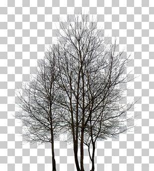 Tree Desktop Rendering PNG