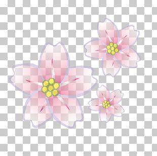Woman Flower Petal PNG