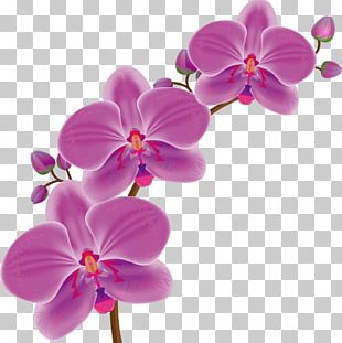 Orchids Drawing Flower PNG