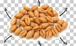 Grain Rice Biogra Oat Bran 100% Bio (Vitamins & Supplements PNG