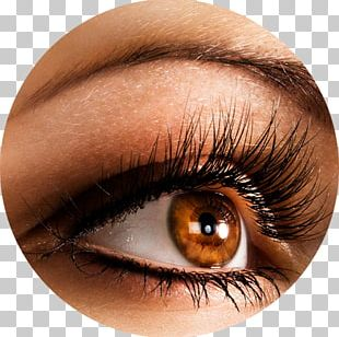 Eyelash Extensions Artificial Hair Integrations Beauty Parlour Cosmetics PNG