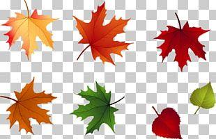 Maple Leaf Autumn Leaflet PNG