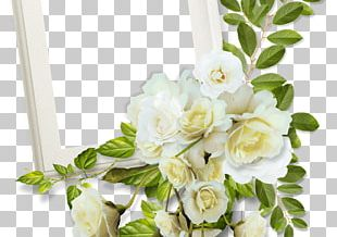 Frames Photography Borders And Frames Decorative Arts PNG