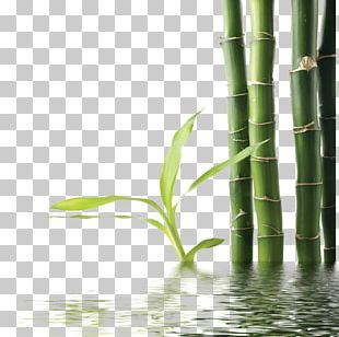 Bamboo Green PNG
