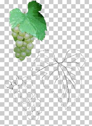 Grape Leaves Leaf Illustration PNG