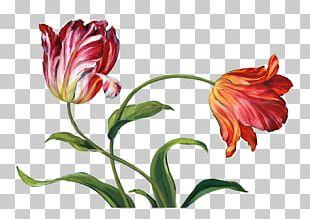 Flower Floral Design Tulip Painting Canvas Print PNG