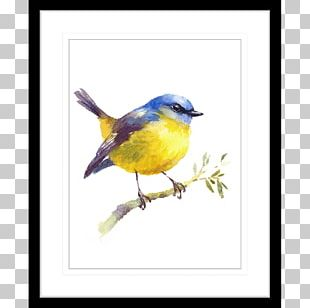 Bird Watercolor Painting Art Drawing PNG