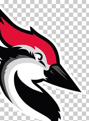 Woodpecker Beak Bird Email PNG