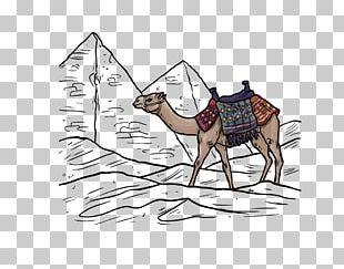 Camel Desert Euclidean PNG