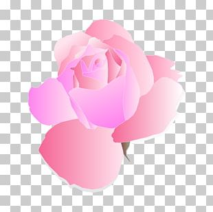 Rose Pink Flowers PNG