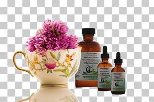 Herbal Tea Health PNG
