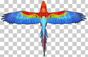 Scarlet Macaw Parrot Blue-and-yellow Macaw Bird PNG