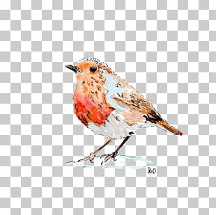 European Robin Drawing Paper Bird Watercolor Painting PNG