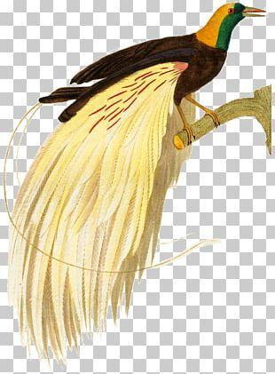 Bird Of Prey Beak Galliformes Water Bird PNG